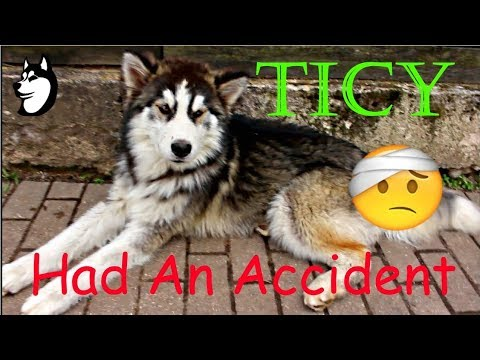 Ticy Had An Accident + More | 34 Weeks Old (2018)