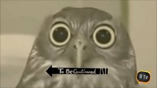 To be continued Compilation # 1 // Animals