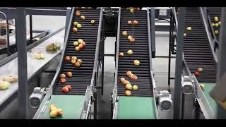 How Its Made | Grocery Store Apples