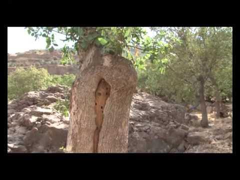 منطقه هلن ( استان چهار محال و بختیاری )