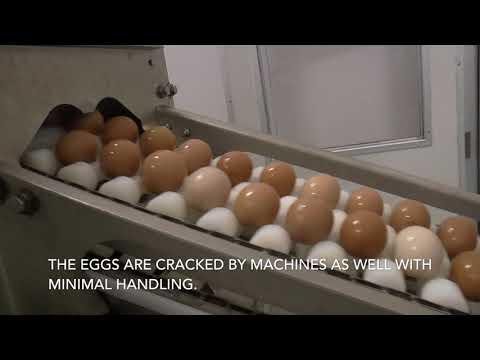 Egg Story (A story of modern egg farming)