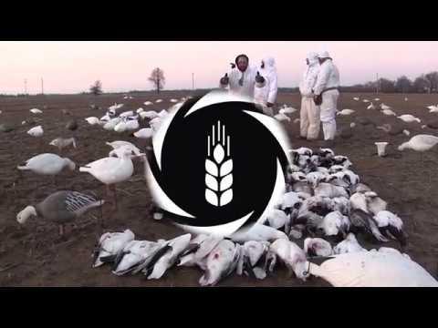 2018 Snow Goose Educational Series Video 1 Of 6