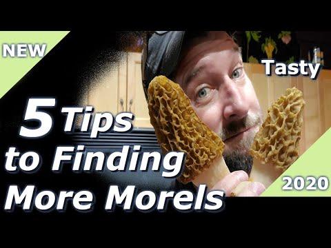 5 Tips For Finding Morels 2020