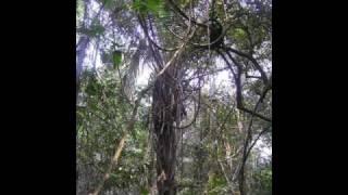 Letu Stuke-Gorila u Magli