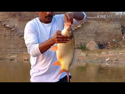 Big Fish,Hyderabad Fish Hunting, Howtstanding, 3kg Gold Fish Catching.