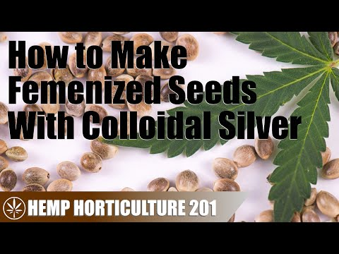 Making Femenized Hemp Seeds With Colloidal Silver