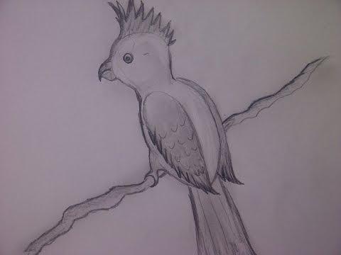 Einen Papagei zeichnen. Vögel zeichnen für Anfänger
