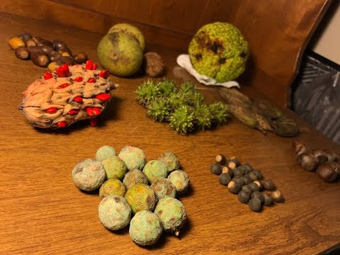 Tree Seeds To Collect During The Fall Time