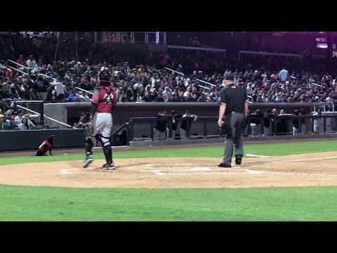Bill Black - Hey baseball fans, he's Batdog!