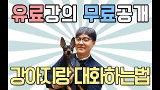 [강아지 훈련] 강아지와 대화하는 법 l 펫을부탁해