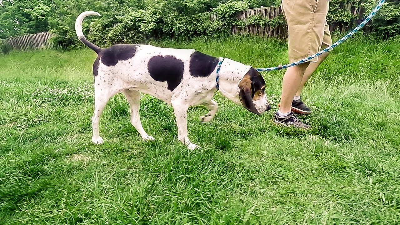 Sterling - Reston - Ashburn, VA Dog Day Care, Boarding