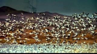 IMAX - The Magic Of Flight Full Movie HD