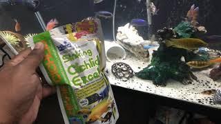 New food & fish - Moorei African Cichlid, Acei Cichlid, Duboisi Cichlid