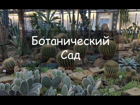 VLOG 23. Ботанический Сад. Санкт-Петербург, март 2018.