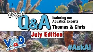 Live Q&A with Thomas & Chris: July Edition - July 23rd @ 1pm EST