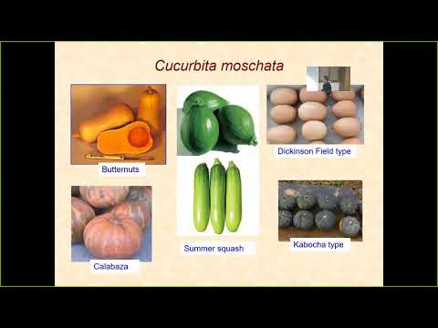 James Brent Loy: The Incredible Wealth of Genetic Variation in Cucurbita ...