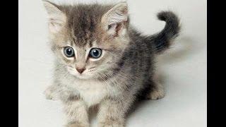 Spróbuj się nie zaśmiać #2 / Śmieszne koty