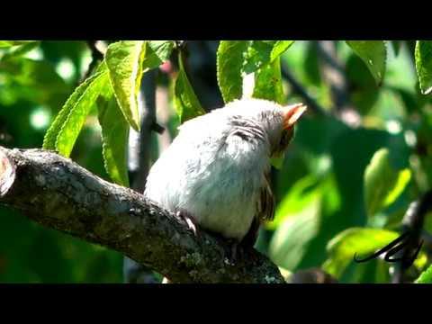 Little Bird Loves the Summer Sun  - July 8, 2019  - YouTube