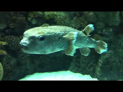 Aquarium of Omaha's Henry Doorly Zoo