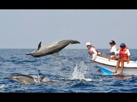 Dolphin spotting in Arabian sea at goa  || coco beach ||