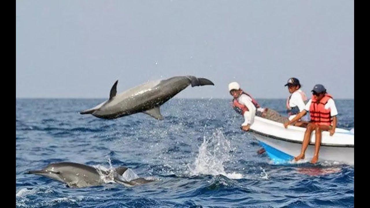 Dolphin Spotting In Arabian Sea At Goa Coco Beach