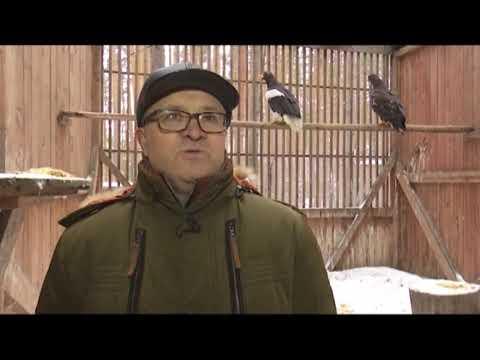 Белоплечие орланы будут жить в уральском питомнике