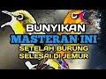 Putar Masteran Ini Setelah Burung Pleci Dijemur  Mp3 - Mp4 Download