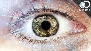 How The Human Eye Evolved To Be So Complex