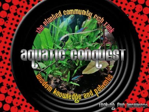 Community Planted Fish Tank