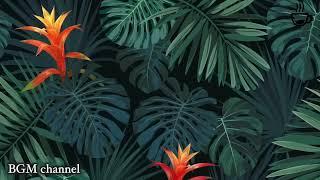 Relaxing Hawaiian Background Music - Tropical Mood Music