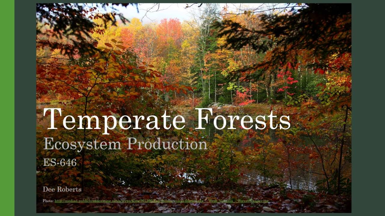 Key characteristics of temperate deciduous broadleaf forest · deciduous forests have a long, warm growing season as one of four distinct seasons. Temperate Forests Ecosystem Production Youtube