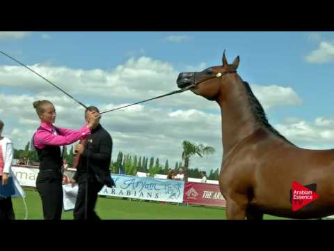 N.25 GRACE J - Chantilly 2017 World Cup - 3 Years Old Fillies (Class 3)