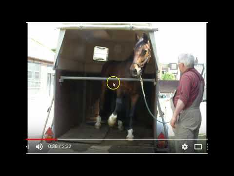 Trailer Loading A Horse - Right Way or Wrong Way? Not A Fan Of This Way