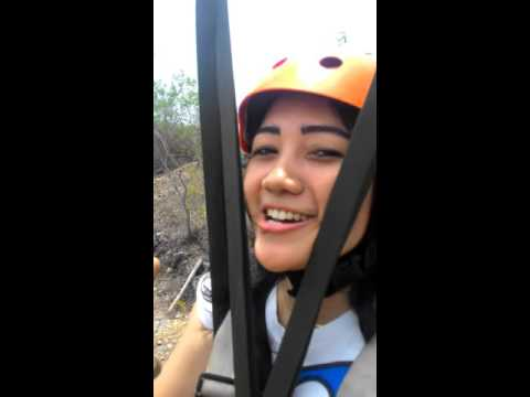 Video flyingfox terpanjang