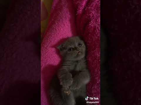Если ты счастливый котик скажи мяу