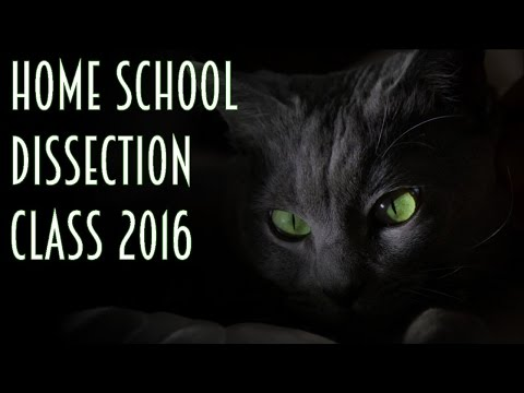 Home School Dissection Class - Dissecting a Cat *GRAPHIC*