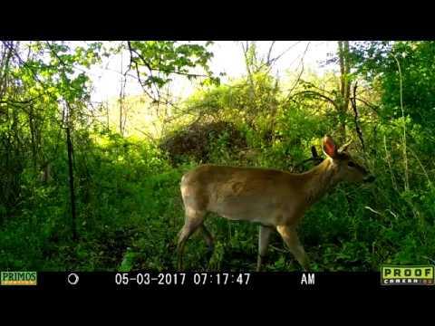 Primos proof cam 02 review | primos cameras for sale – trailcampro. Com.