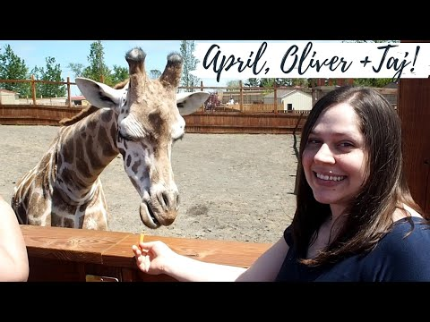 Thumbnail: APRIL the GIRAFFE, Oliver & Baby Taj! ( Tajiri )❤️Animal Adventure Park, NY⛰️ SweetFamilyLife