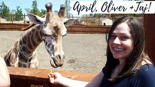connectYoutube - APRIL the GIRAFFE, Oliver & Baby Taj! ( Tajiri )❤️Animal Adventure Park, NY⛰️ SweetFamilyLife