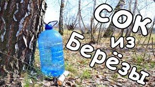 видео Как добывать березовый сок