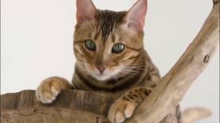 Кошачья смарт-миска
