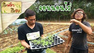 ถึงพริกถึงขิง (Tuengpriktuengkhing) 30-08-17 : ผักเคล จอนนอนไร่