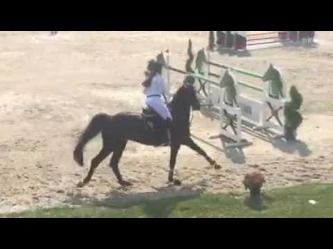 High Tech Vy de Septon • 3ème GP 145 cm CSI2* Moorsele • 18/06/2017