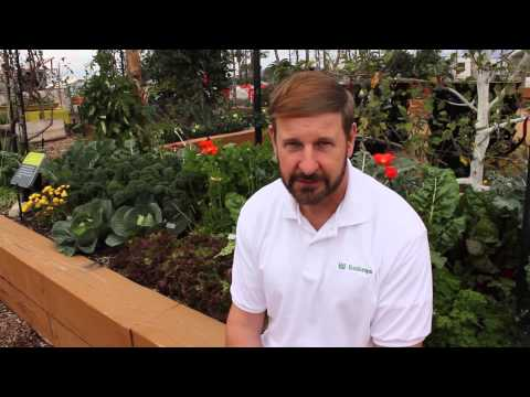 When To Plant Your Garden