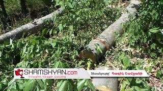 Ողբերգական ավտովթար Տավուշի մարզում  «Վիլիս» ը անտառում վթարի է ենթարկվել