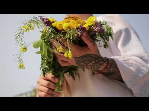 Цветки цикория в народной медицине. Чем полезны цветки
