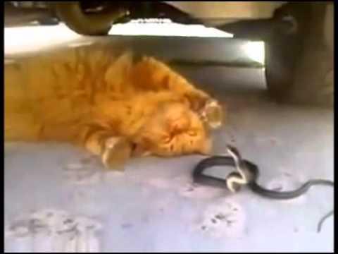 Cuộc Chiến Mèo Và Rắn