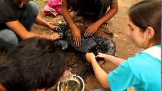 Спасение собаки от застывшей смолы  TOP VIDEO