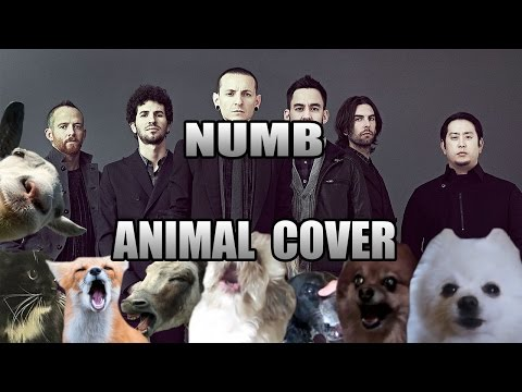 Linkin Park - Numb (Animal Cover)