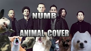 Baixar Linkin Park - Numb (Animal Cover)